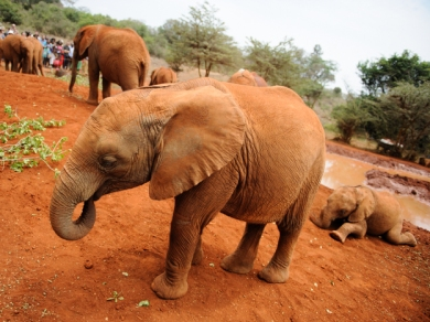 David Sheldricks Elephant Orphanage-001