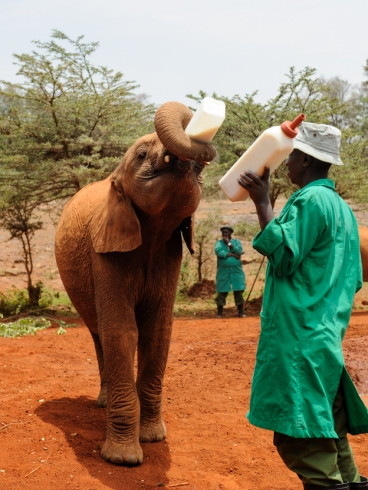 David Sheldricks Elephant Orphanage-002