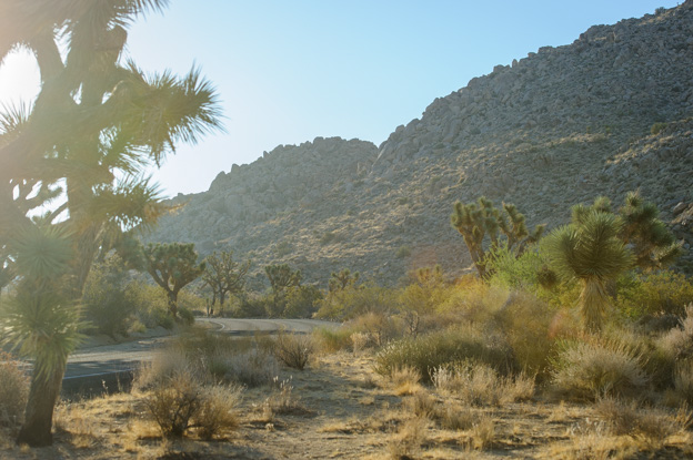 Morning in Joshua Tree NP_001