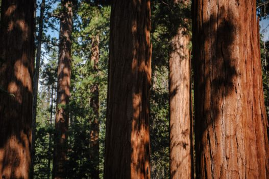 Redwood Canyon Trail_002