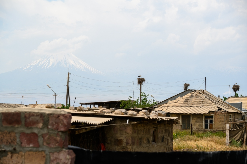 White stork in Armash with Little Ararat in background